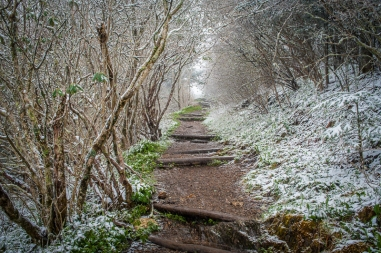 wk_robert-stephens_waterrock-knob-mp-451-trail